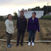 Solidario  Flores De Santo Tomas Group
